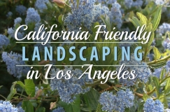 california-friendly-landscaping-image-english